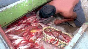 La Asamblea ratifica acuerdo internacional para frenar pesca ilegal