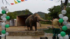 La fastuosa fiesta de despedida de un elefante maltratado en Pakistán