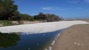 Investigan la muerte de miles de peces en una laguna en el Caribe hondureño