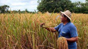 Gobierno calcula que sector agro de Panamá necesita 2.500 millones de dólares