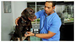 ¿Cómo tratar a las mascotas que presentan alergias?