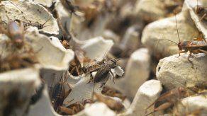Vendedora de grillos tropieza e insectos quedan libres en metro de NY