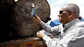 Panamá instala chips en sus árboles para frenar la tala ilegal
