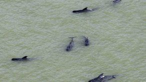 Mueren nueve orcas varadas en una playa de Nueva Zelanda