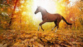 ¿Por qué los caballos se comen sus heces?