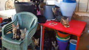 Agentes españoles rescatan 101 gatos hacinados en una vivienda de 37 metros
