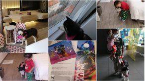 Conoce la atención VIP que reciben las mascotas en el W Panamá