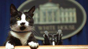 Hay una vacante en la Casa Blanca: la mascota presidencial