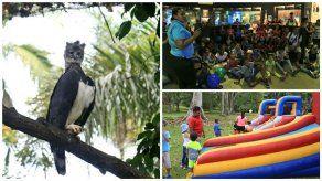 Chicos y grandes celebran el cumpleaños del águila harpía Panamá