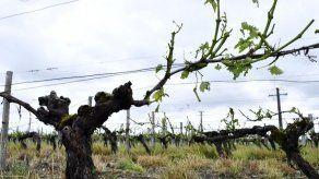 Más de 7.000 hectáreas de viñedos dañadas por el granizo en Burdeos