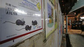 Una persona contrae hepatitis por ratas en Hong Kong