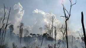 Estados de Brasil negocian fondos para Amazonia con Noruega