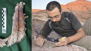 Hallan en Argentina nueva especie de pequeño dinosaurio carnívoro