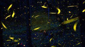 Granjeros en México usan luciérnagas para salvar el bosque
