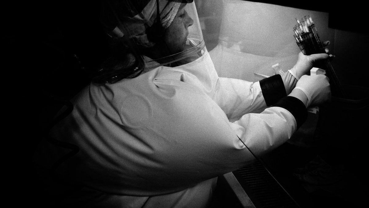 La viruela, que mató a alrededor de 300 millones de personas en el siglo XX, más que los conflictos armados, fue declarada oficialmente erradicada por la OMS en 1980.