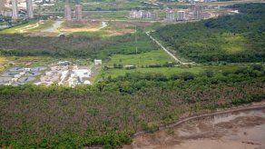 Científicos investigan afectación de mangle negro de la Bahía de Panamá