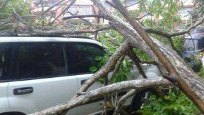¿Quién debe pagar los daños por la caída de árbol o poste sobre un auto?