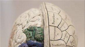 EE.UU. convoca las primeras ayudas para programa de investigación del cerebro