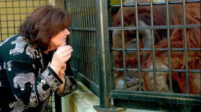 Orangután que aprendió lenguaje de señas fallece en Atlanta