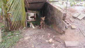 El coyote que se encontraba en cautiverio en una residencia del sector de Nuevo Méjico.