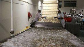 Panamá recibe certificación para exportar camarones a EEUU
