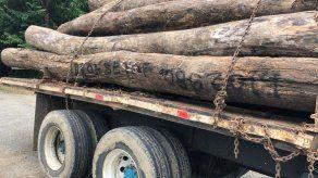 En 6 años se han deforestado 20 mil hectáreas en Darién