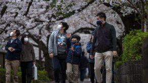 La rápida floración de los cerezos bate récords en Japón