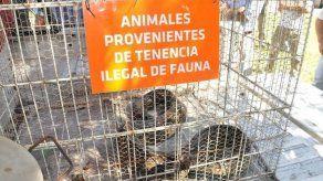 Hallan durmiendo a boa que aterrorizó a vecinos de Buenos Aires