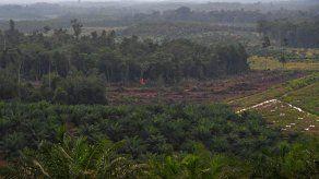 Expertos de Latinoamérica analizan uso de tecnología satelital en bosques