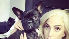El encargado de pasear a los perros de Lady Gaga ha recibido el alta definitivamente