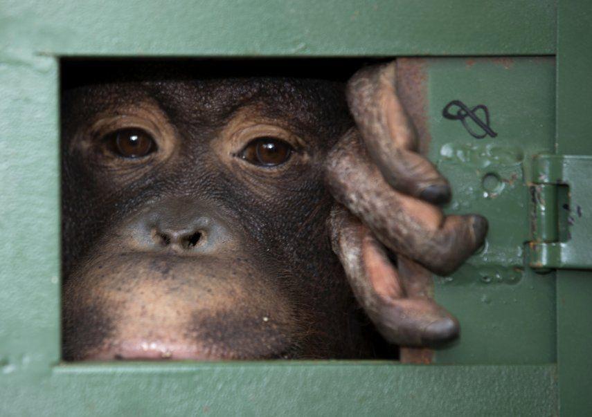 Las autoridades de Tailandia dijeron que están enfocando su atención en evitar crisis futuras vinculadas a la propagación de enfermedades transmitidas de animales a los humanos.
