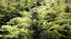 Hallan en Colombia cargamento de marihuana en cilindro adherido a embarcación