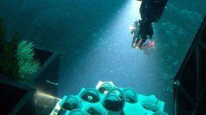 Descubren nueva especie de coral blando en Coiba