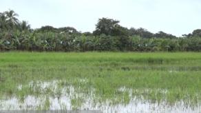 Jiménez: Toda la actividad agrícola está suspendida en Chiriquí