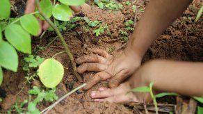 Panamá presenta iniciativa para el manejo de recursos forestales a 2050