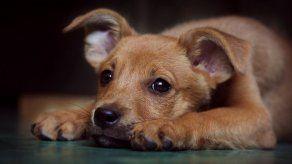 Uruguay dispone identificación y registro obligatorio de perros y sus dueños