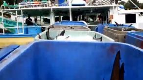 Decomisan 6 mil libras de tiburón y otras especies en Chiriquí