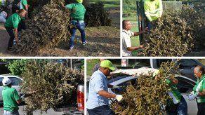 AAUD inicia este miércoles operativo de recolección de arbolitos de Navidad