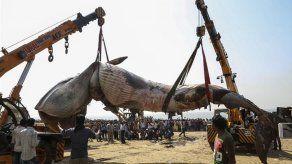 Una ballena de 10 metros fue hallada muerta en una playa de Bombay