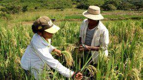 FAO insta a mejorar estadísticas del agro para diseñar políticas útiles