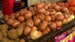 Problemas en la distribución de la cebolla provoca cautela en los productores nacionales