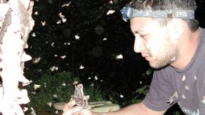 Diversidad de mariposas panameñas será investigada por científicos franceses