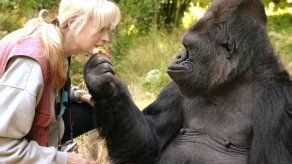 Fallece Koko