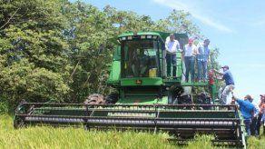 Ministro Valderrama: No habrá importación de arroz