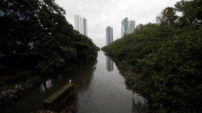 Alertan de fragilidad de humedal de la Bahía de Panamá de importancia mundial