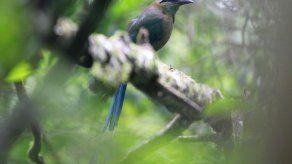 La pérdida de humedales en América es la mayor amenaza para aves migratorias