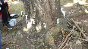 MiAmbiente implementará uso de tomógrafos para evidenciar condición de árboles