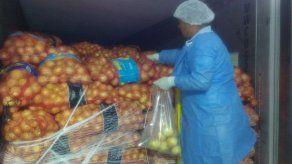 Llegan los primeros 30 mil quintales de cebolla importada a Panamá