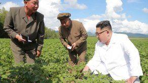 Corea del Norte reconoce dificultades en su agricultura