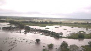 Por los menos 275 hectáreas de arroz han sido afectadas por el mal tiempo